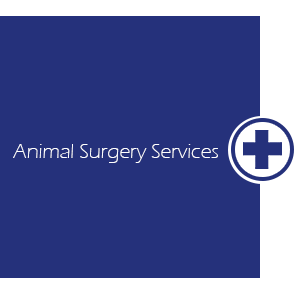Medical Cross - Veterinary Hospital